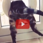 The Funniest Cat Video You'll Ever Watch!